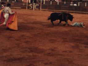 Matador Down